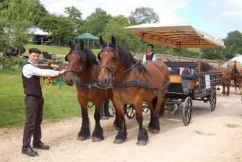 Equitation en attelage